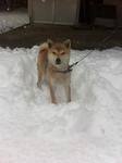 チロ雪.JPG